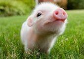 属猪男喜欢的女生