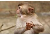 属猴结婚忌什么属相 属猴的最佳婚配