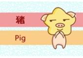 今日生肖相冲查询 2019年2月7日