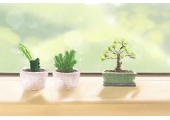 客厅最适合摆放什么样的盆栽