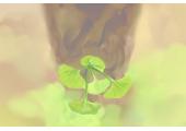 开店植物摆放在什么位置旺财