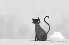 当猫跟着走时是什么预兆 选择主人