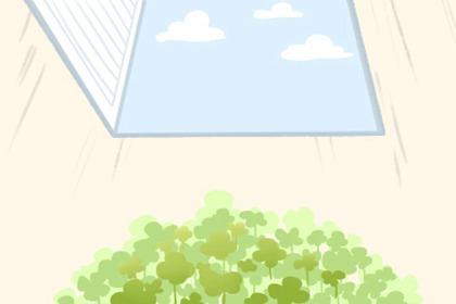 进门对面放什么植物好