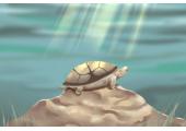 属什么生肖家里不能养乌龟 兔龙狗