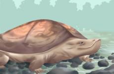 属什么生肖的人最适合养乌龟