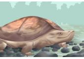 捡到乌龟有什么象征 可以镇宅