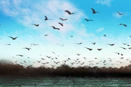 泥鳅的风水作用,家里的鱼缸养泥鳅影响风水吗