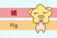 36岁属什么生肖配偶 属猪配偶是龙