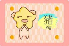 属猪的今年运势怎么样 注意犯太岁的问题
