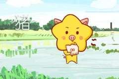 本周生肖猪运势(1.27-2.2)