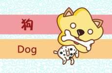 本周生肖狗运势(4.13-4.19)