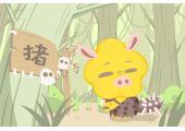 肉字代表什么生肖 代表猪