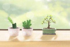 办公室摆放什么植物好 摆放绿萝