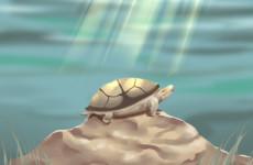 家里养的乌龟死了一定会发生事情吗 风水有什么讲究