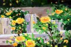 哪些花属于阳气花 助长阳气的花