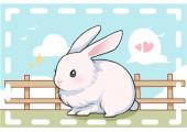 1987年属兔的人是什么命