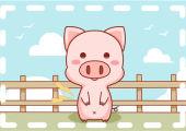 1971年属猪人的命运 财运事业家庭逐步提升