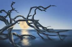 属蛇大林木命姻缘 初期不和后期幸福