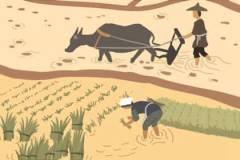 芒种节气的寓意和传统 农忙时节安苗祭祀