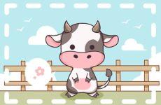 属牛男八月十五出生什么命 天生具领袖能力