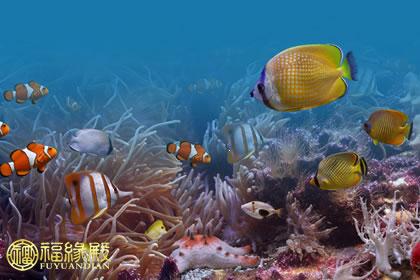 壁纸 海底 海底世界 海洋馆 水族馆 桌面 420_280