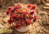 解析:五行属性看你适合养什么样的花
